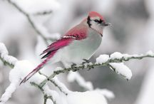 Talvi / Talvisia kuvia