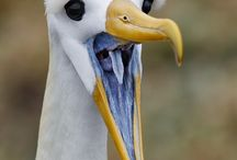 Fula fåglar