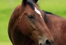 Horse!!!!!!!!!!