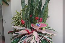 Green Plants & exotic flowers / by Heather Riehle