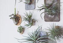 植物・インテリア
