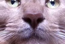 Cat. Cat is Bruce