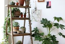 PLANT•ORGANIZATION / How to display your plants nicely