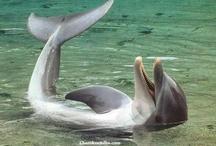 Delfín nadando al revés