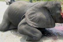 slonovina