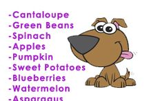 Healthy Raw for Dogs!!!