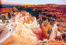 America's Magnificent National Parks / Discover the great parks of the Continental Divide as you journey from the jagged peaks, verdant forests, and cascading waterfalls of Yellowstone and the Grand Tetons to the unmatched splendor of the Grand Canyon and the red-rock formations at Bryce Canyon.  / by Vantage Travel