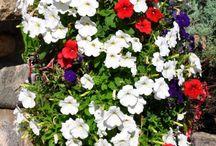 Torre fiorita / Giardino
