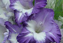 花 Blume