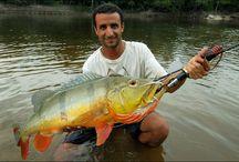 Arte de pescar