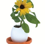 sunflowers for kids / Sunflowers and sunflowers craft for kids gardening
