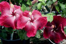 photos plantes