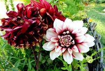 Flori / Fotografii cu flori