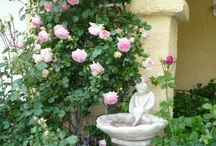 Garden Inspirations / Garden Ideas, for our next house! / by Jo Anna ʚϊɞ