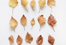plod zim, plod zim.... podzim I autumn feels