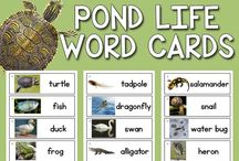 forest and pond animals