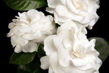 Flowers Galore / Flower gardens, bouquets, arrangements, inspiration