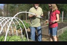 Our Veggie Gardens