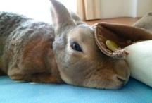 rabbit / my rabbit (mini rex) names CHU and other cute rabbits.