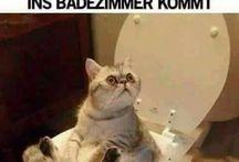 Witze/Sprüche