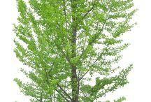 alberi ed altro