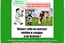 Мотиваторы вегетарианства