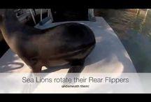 Dolphins Plus Videos