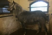 Horses and Ponies / Horses and ponies that we have in stable