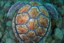 Turtles and all things beautiful / My favourite animals