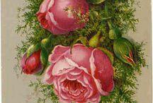 Rozen, rozen en meer rozen / Roses