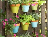 Garden ideas / All the things I would like to grow in my garden
