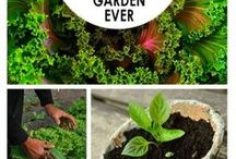 pěstujeme