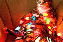 Cats celebrating Christmas