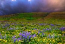 Springtime in the Mountains! / by Cindy Goodman