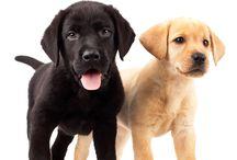 House training puppy