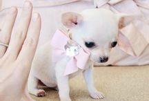 doggy i want**