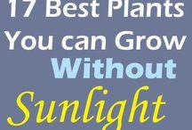 Plante care cresc fara soare