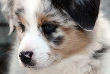 cute dogies