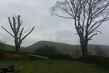 Tree Cutting at Paddock House Farm Holiday Cottages Derbyshire