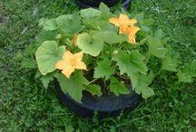 Gardening / patios,gardens,flowers