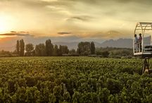 Wine Destinations in South America / Beautiful images taken from our collection of the best wine destinations in South America.
