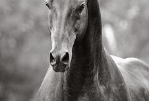 Лошади/ Horses / Divine animals
