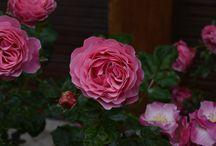 Flowers / Registros de uma paixão