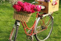 bi-cycle / by Rebecca VanCuyk