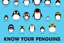 Penguins ❤❤❤