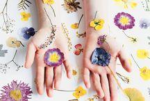 Craft - Pressing Flowers