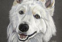 Portraits chats et chiens