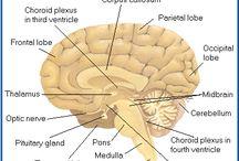 Neurophysiology...