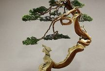 Bonsai / So beautiful and pretty trees.  It's  artistic Japanese style.