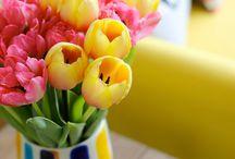 Spring / by Kayla Reuss